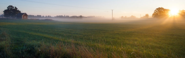 Sunlight and fog over a meadow in the summer