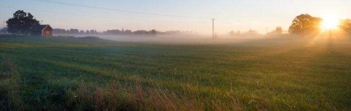 Dimma och solljus över sommaräng